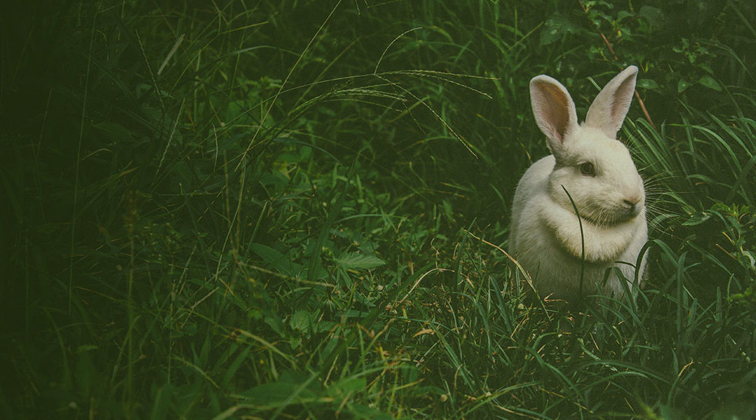 Book Review: Wealthing Like Rabbits by Robert R. Brown