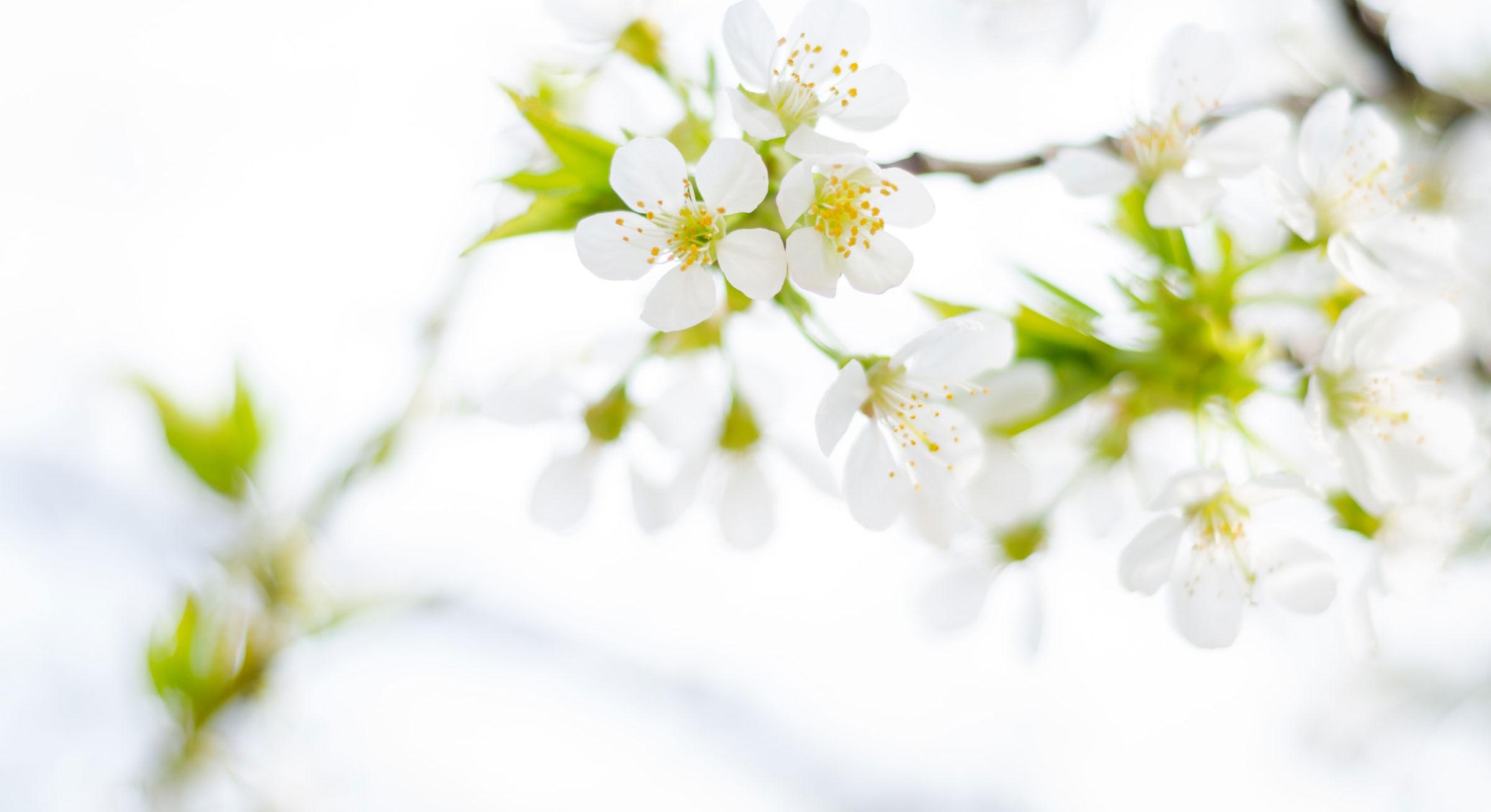 Spring Plans Banner blossoms